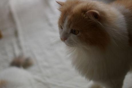 IMGP1128ー猫