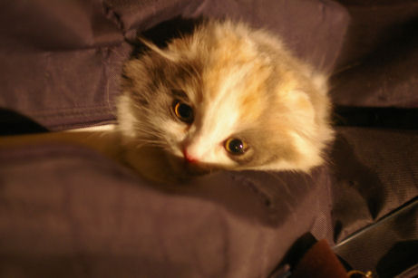 IMGP1151ー猫