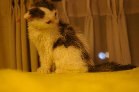 IMGP1159ー猫