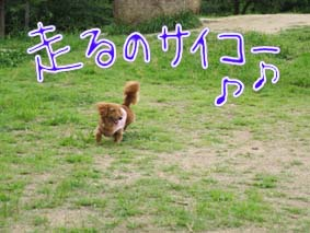 BLOG70604.jpg