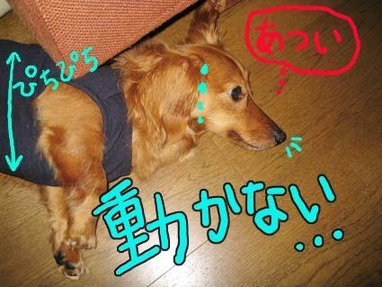 BLOG70905.jpg