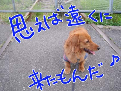 BLOG71104.jpg