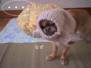 犬ニット着用1