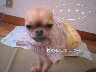 犬ニット着用2
