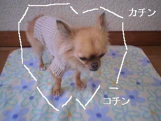 犬用ニット着用7