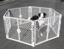 dogcage 261-200px