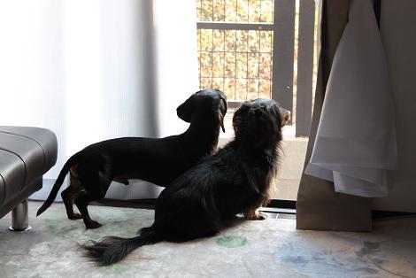ヴィヴィ&マイロ被写体