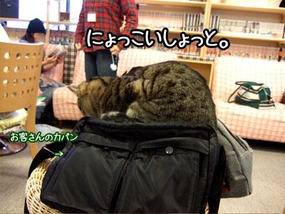011.11-2_20071112103625.jpg