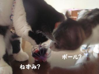 みけさん7
