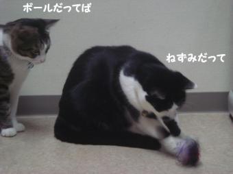 みけさん12