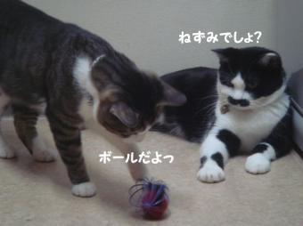 みけさん13