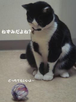 みけさん14