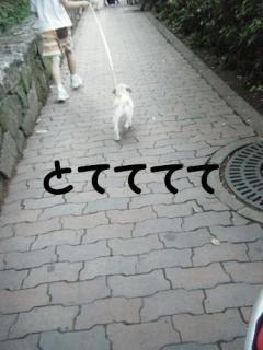 わらび散歩4
