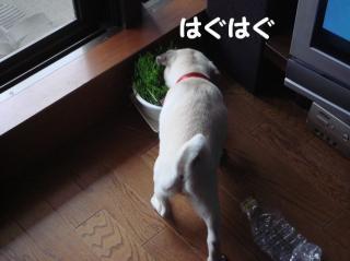 わらびと草
