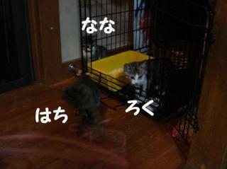 にゃんズ3匹