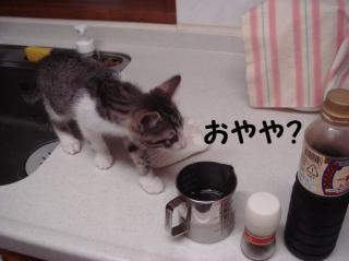 ななの好奇心2