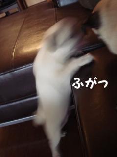 わらびの攻撃1