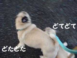 散歩へGO!