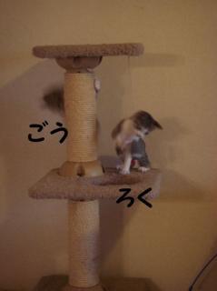 にゃんとタワー2
