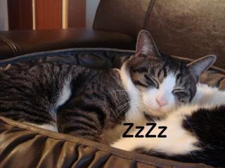 たまこ寝る2