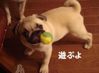 わらびとボール