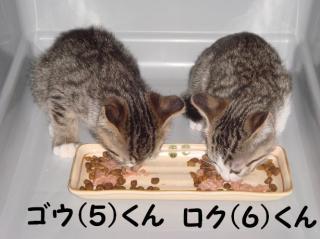 にゃん食べる