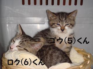 にゃん達2