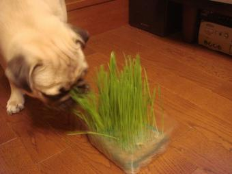 育った草1