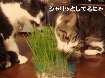 育った草3
