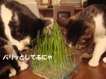 育った草4