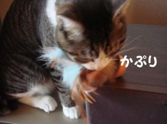 たまことおもちゃ3