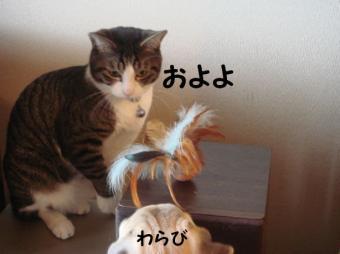 たまことおもちゃ4