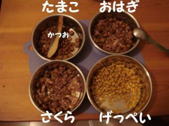 にゃんズのご飯