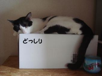 箱の上のぺー1