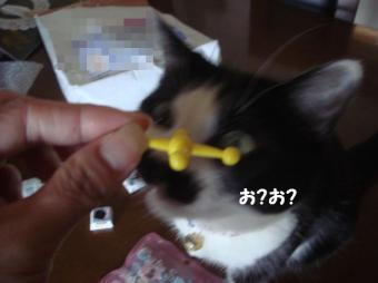 おもちゃと1