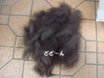 ルークの毛