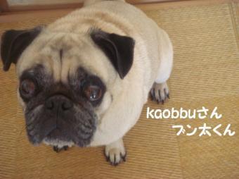 kaobuさん15