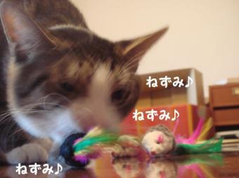 ぴんぽんさん9