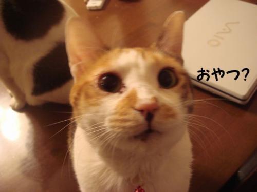 ミコさん5