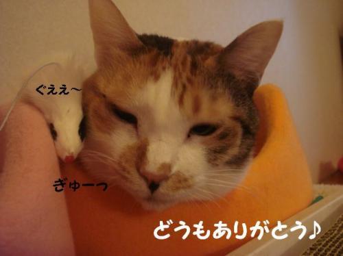 ミコさん11