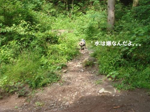 キャンプ33