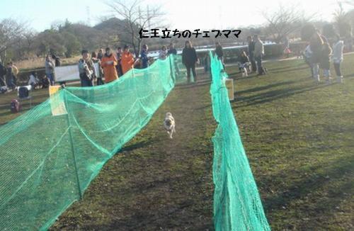 レース14