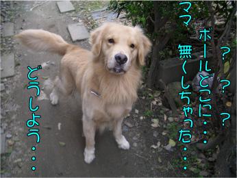 CIMG2917 (1)
