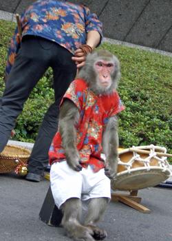 200706_monkey.jpg