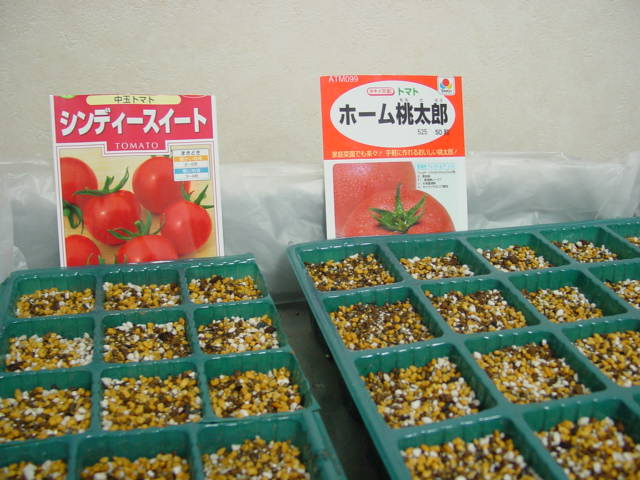 トマトの種蒔き