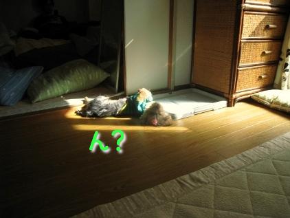 陽だまりで昼寝中