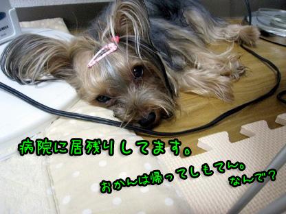 004_20090708104338.jpg
