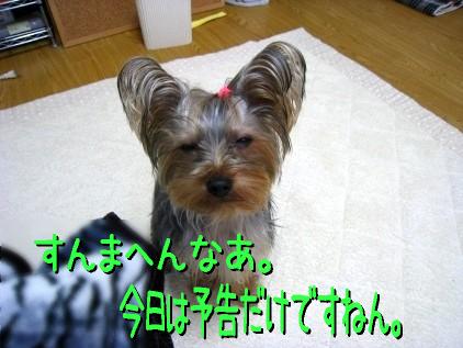 006_20090117195339.jpg