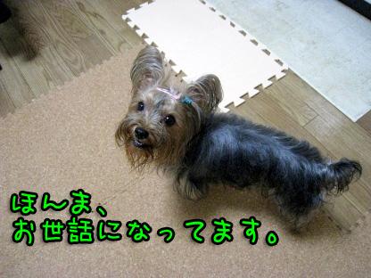 008_20090708104338.jpg