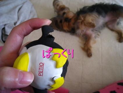 010_20090207200707.jpg